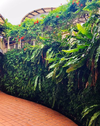 Lush greenery at Sutera Mall